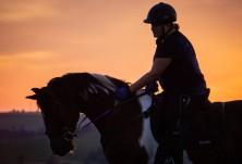 Какви мерки предприеха конните бази, за да се върнат към нормалния си режим на работа?